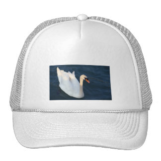 White Swan in the Lake Constance - Hat