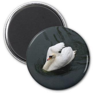 White Swan Refrigerator Magnets
