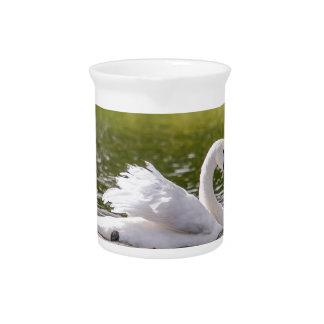 White swan on a lake pitcher