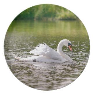 White swan on a lake plate