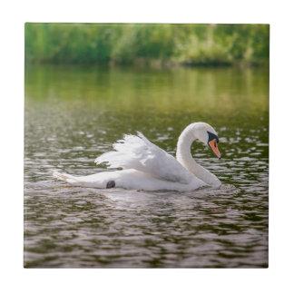 White swan on a lake tile