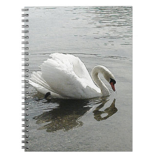 White swan, reflecting in the grey water notebook
