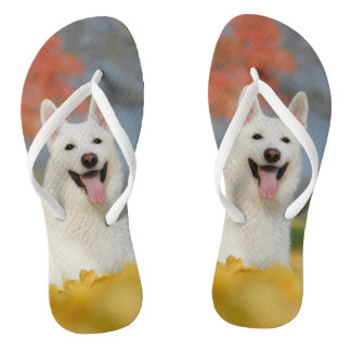 White Swiss Shepherd Dog Photo / Cute Furry Friend Thongs