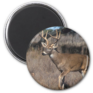 White Tail Deer 6 Cm Round Magnet