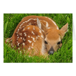 White Tail Deer Fawn Resting Card