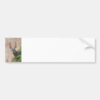 White-tailed Buck Bumper Sticker