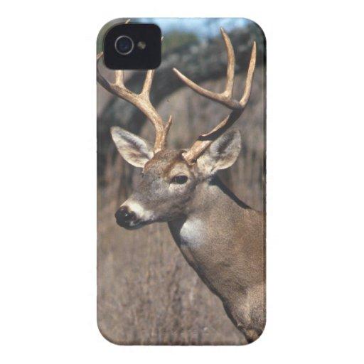 White-Tailed Deer - BlackBerry Bold Cover