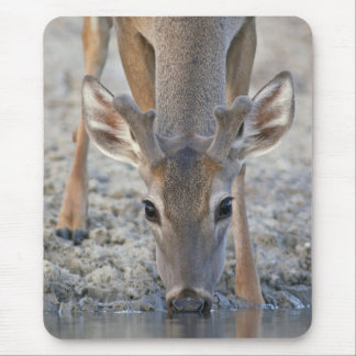 White-tailed Deer Buck in Velvet Drinking Water Mouse Pad