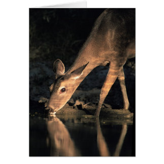 White-tailed Deer Card
