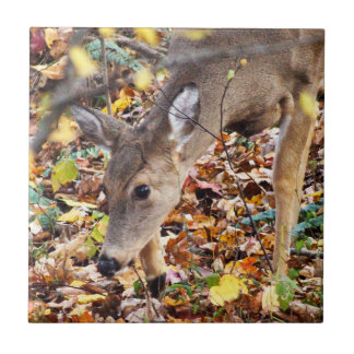 White-Tailed Deer Ceramic Photo Tile