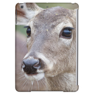White-tailed Deer doe drinking water Case For iPad Air