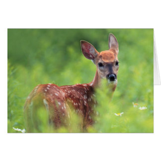 White-tailed Deer Fawn Card