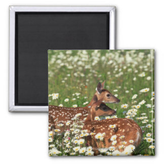 White-tailed deer fawns square magnet