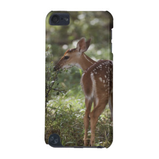 White-tailed Deer, Odocoileus virginianus, 2 iPod Touch 5G Cases