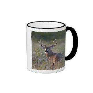 white-tailed deer Odocoileus virginianus) 2 Mug