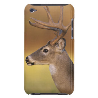White-tailed Deer, Odocoileus virginianus, Case-Mate iPod Touch Case