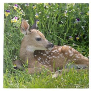 White-tailed deer (Odocoileus virginianus) Tile