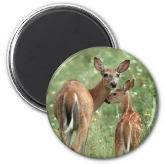 White-tailed Deer with Fawn 6 Cm Round Magnet