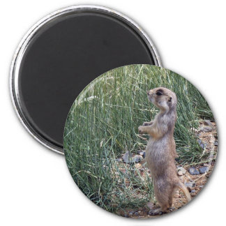 White-tailed prairie dog magnet