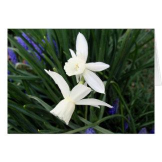 White Thalia Daffodils Card