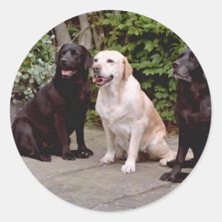 White Three Labrador retrievers sitting flowers Round Sticker