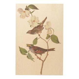 White Throated Sparrow Bird Wood Canvas