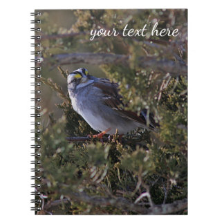 White-throated sparrow notebook