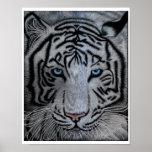 White Tiger - Casper Poster