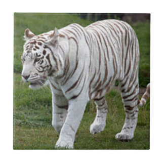 White Tiger Ceramic Tile