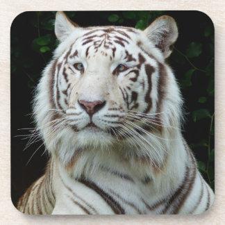 White Tiger Coaster Set