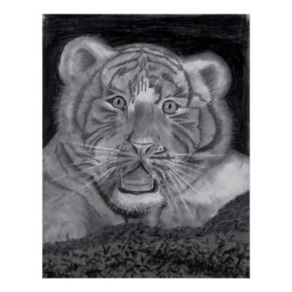 White Tiger Cub in Charcoal Posters