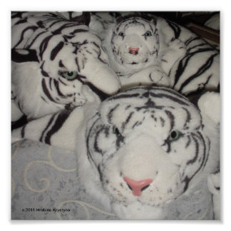 WHITE TIGER FAMILY POSTERS