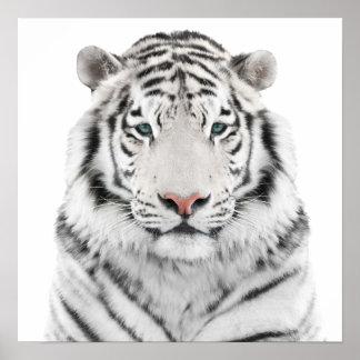 White Tiger Head Poster