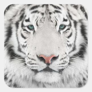 White Tiger Head Square Stickers