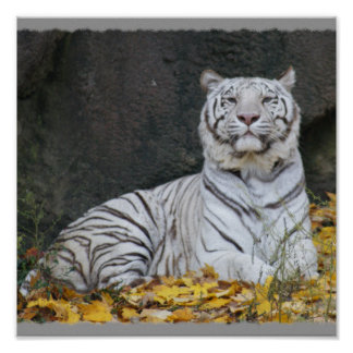 WHITE TIGER in FALL FOLIAGE FRAMED PRINT