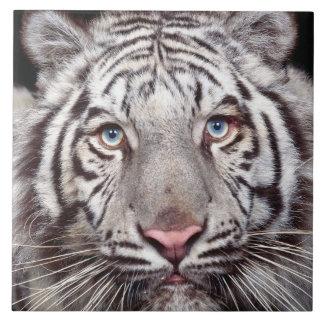 White Tiger Large Square Tile