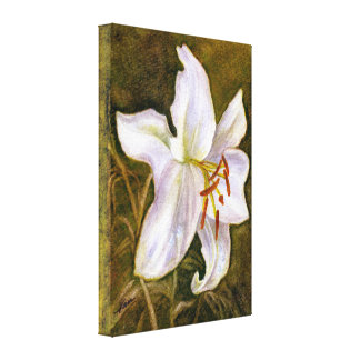 White Tiger Lily Canvas Print