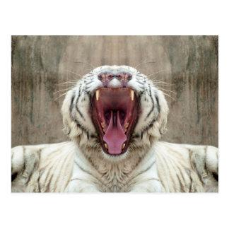 White Tiger Postcards