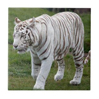 White Tiger Small Square Tile