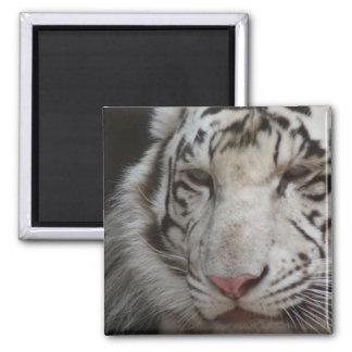 White Tiger Square Magnet Magnet