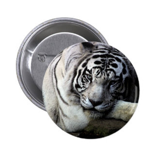 White Tiger Stare 6 Cm Round Badge
