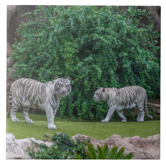 White tigers ceramic tile