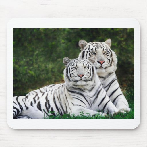 White Tigers Mousepad