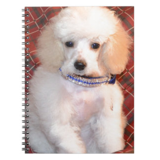 White Toy Poodle Fluffy Puppy Note Books