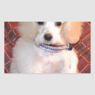White Toy Poodle Fluffy Puppy Rectangular Sticker