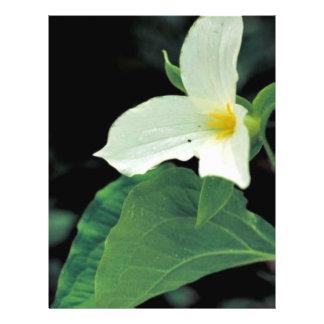 White trillium flyer design