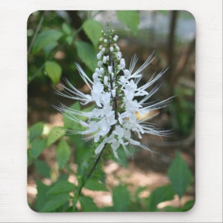 White tropical flower blossom in Orlando Florida Mouse Pad