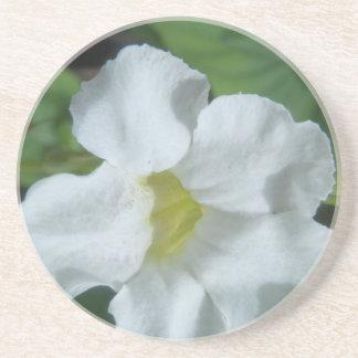 White Tropical Flower Found on Fiji Coaster