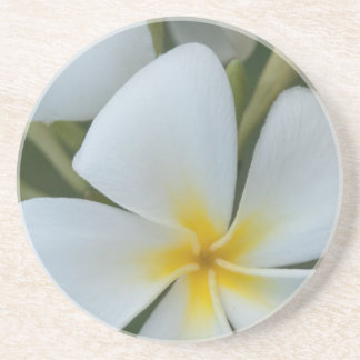 White Tropical Plumeria Flower From Fiji Coaster