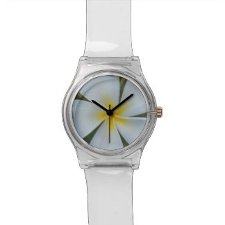 White Tropical plumeria Flower From Fiji Watches